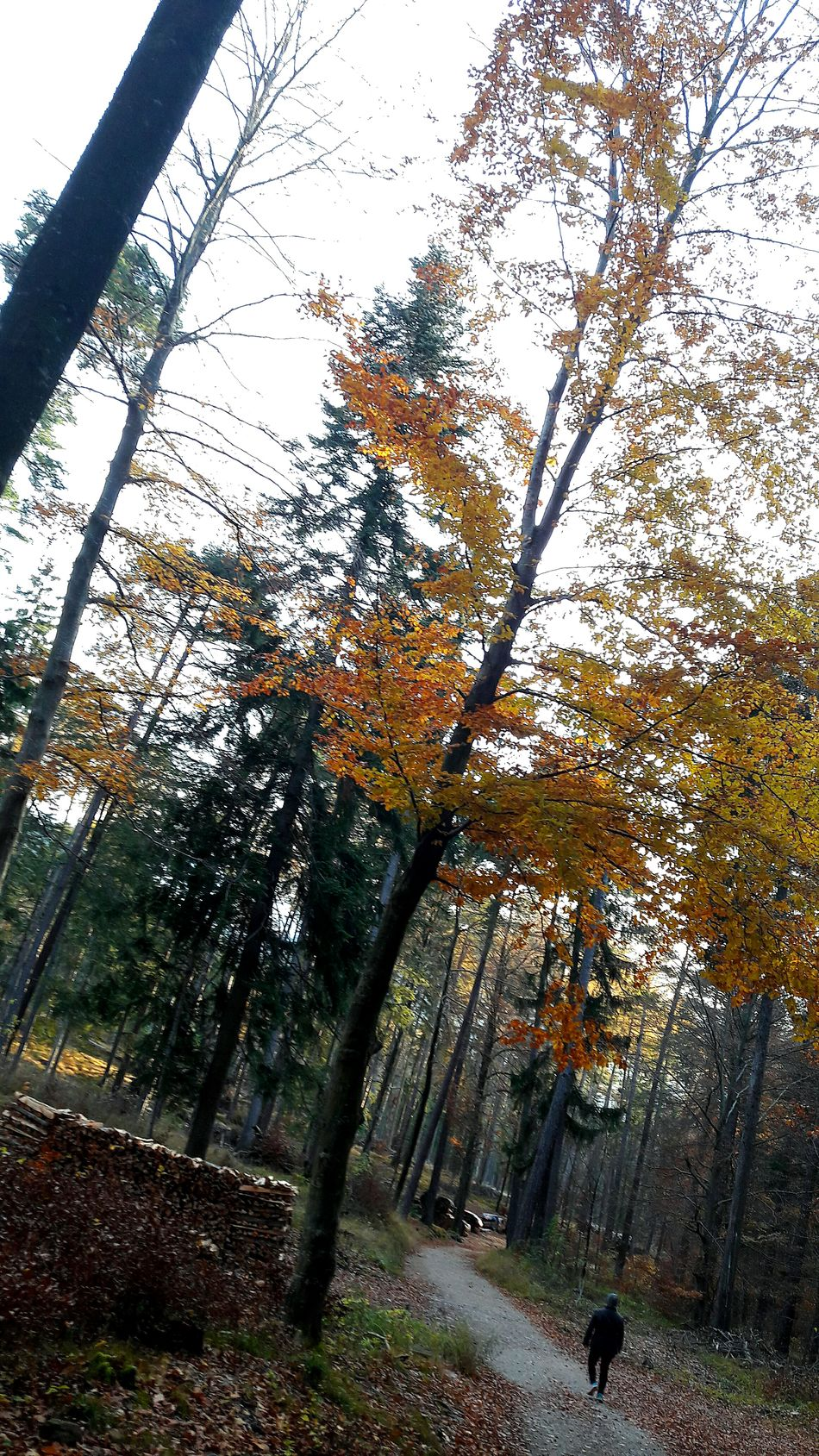 Berge Orang Nice Fresh Sunset Beauty In Nature Herbst 2016 Herbst🍁 Schönes Wetter Tree Swizzerland Bäume