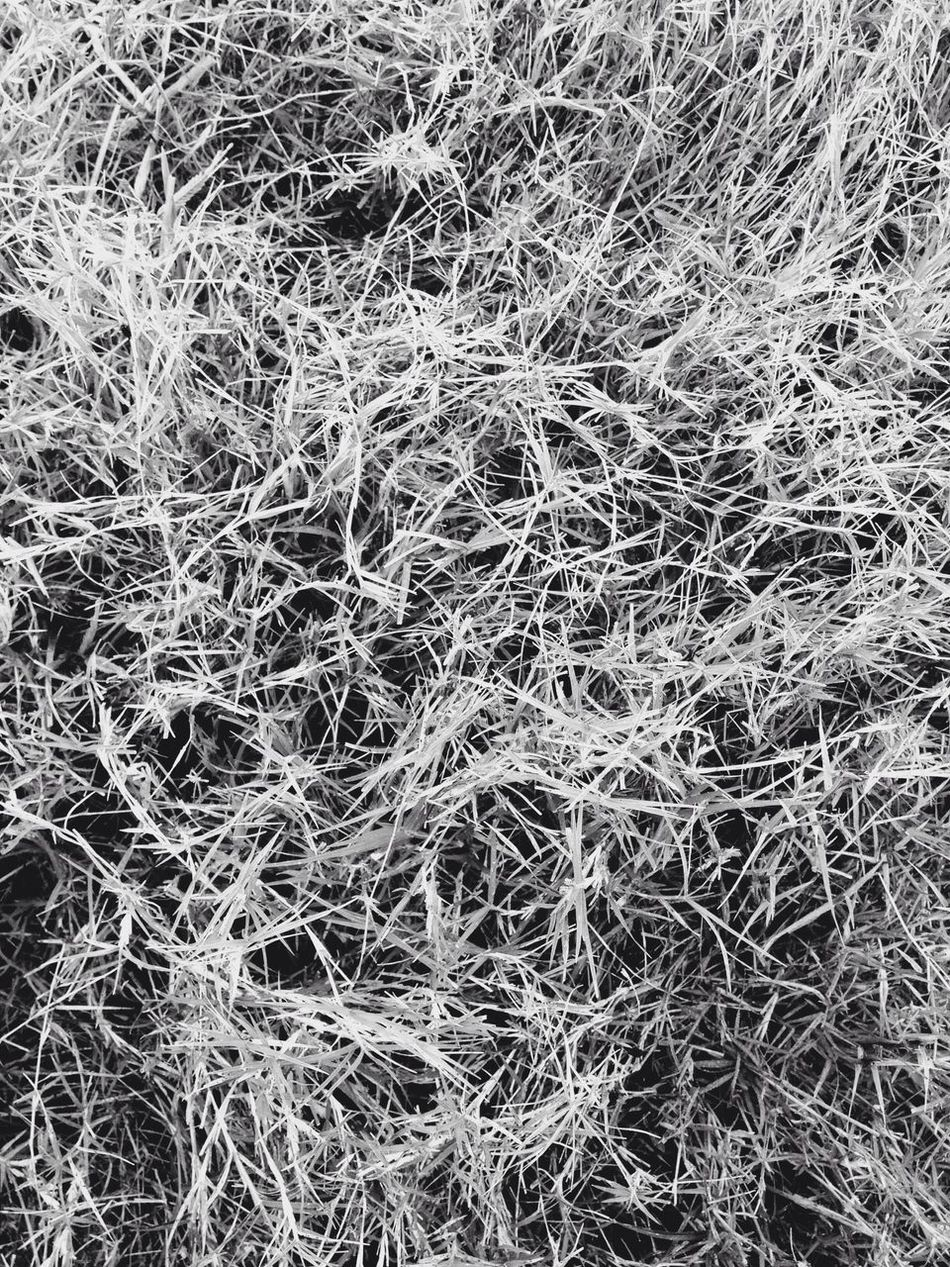 Grass Blackandwhite Black And White Black & White Blackandwhite Photography Black And White Photography IPhoneography Iphoneonly IPhone Iphonephotography Iphonesia IPhone Photography IPhone4s IPhone 4S Mobilephotography Mobile Photography Mobilephoto Mobile_photographer Bangalore India