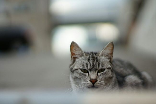 Nofilter EyeEm Cats Stray Cat 野良猫