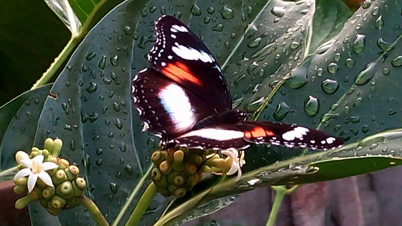 Batterfly  Kupukupu Flora Fauna Mobilephotography Natural Photography