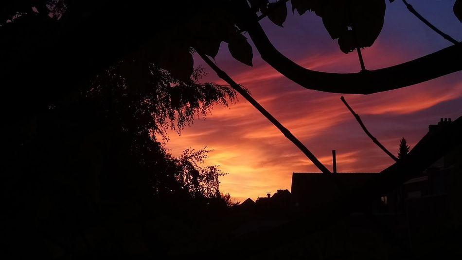 October sunsets.. Sunset No People Sky Outdoors Tree sunset #sun #clouds #skylovers #sky #nature #beautifulinnature #naturalbeauty photography landscape Fall Beauty Fall Collection Fall Season Nature_collection Nature On Your Doorstep Naturephotography Lost In The Landscape Perspectives On Nature