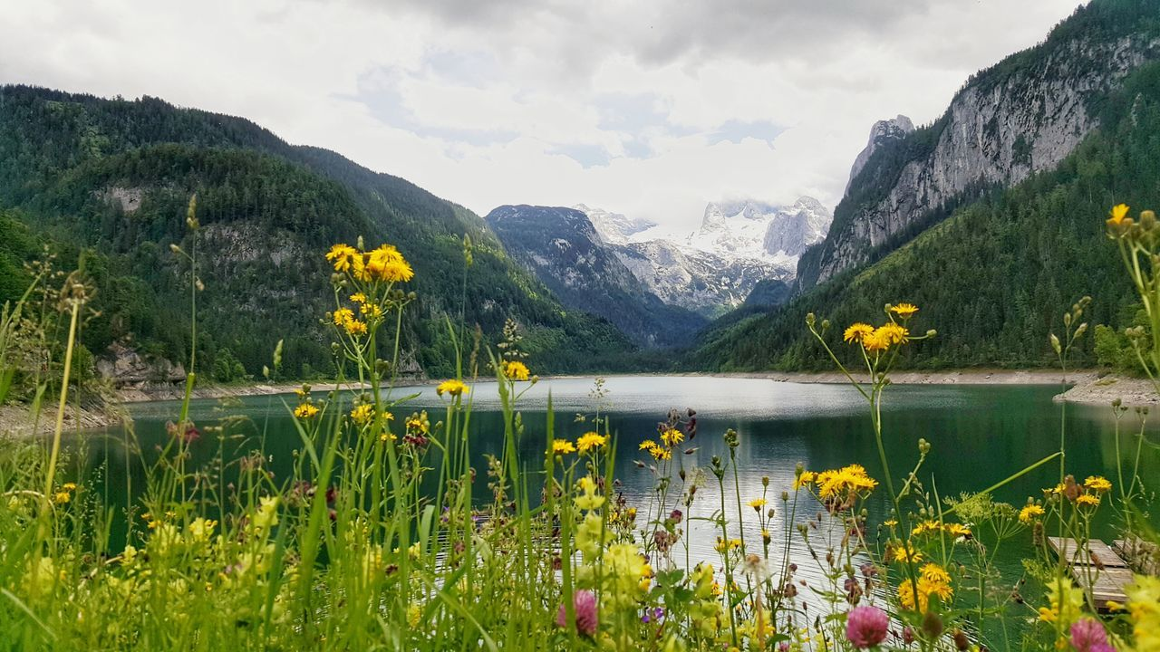 Lake Mountain Nature Flower Day Outdoors Mountain Range Scenics Beauty In Nature Landscape Cloud - Sky Sky Water Travel Destinations No People Vacations Tree Plant Grass Growth Gosausee Austria Bergsee Lake View Hoher Dachstein