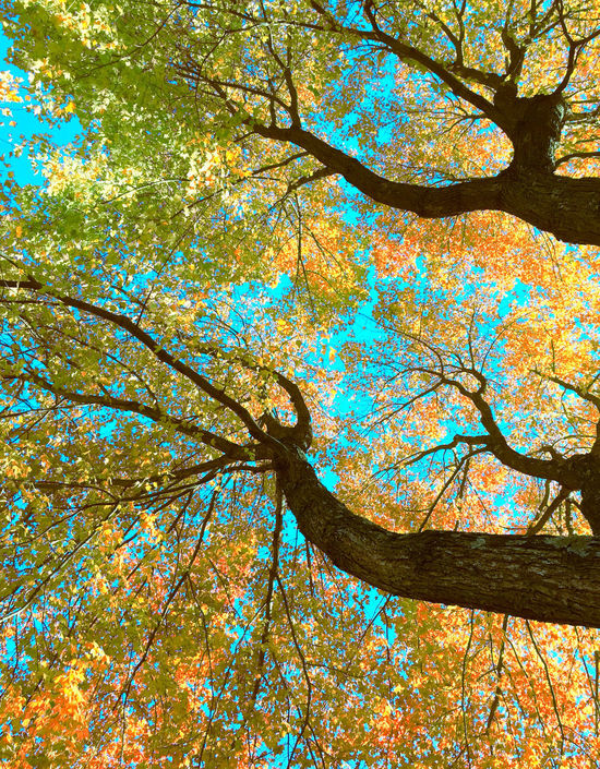Abstract Abstract Art Abstract Photography Autumn Beauty In Nature Branch Cloud - Sky Day Flowers Full Frame Graffiti Growth Leaf Leaves Low Angle View Multi Colored Nature Nature No People Outdoors Sky And Clouds Statues Tree Tree Words