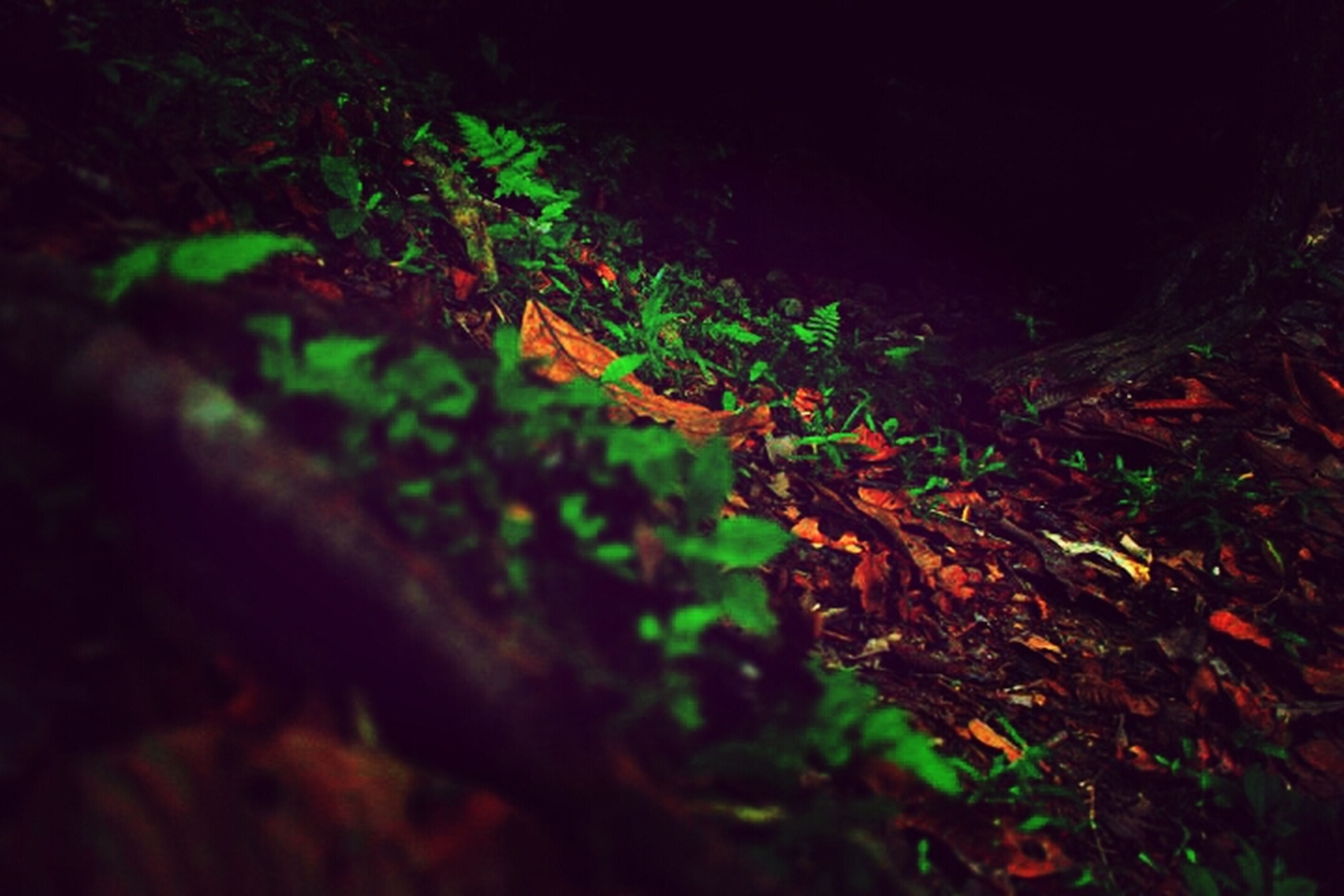 growth, plant, night, leaf, nature, green color, growing, tranquility, high angle view, outdoors, selective focus, beauty in nature, no people, sunlight, field, close-up, dark, moss, rock - object