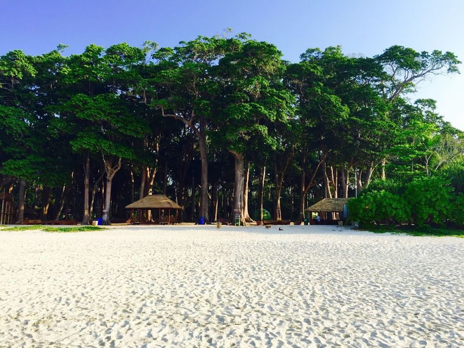 Havelock Islands Andamans Beach Beach Photography Beach Forest Woods Sand Beach Sand Green Trees