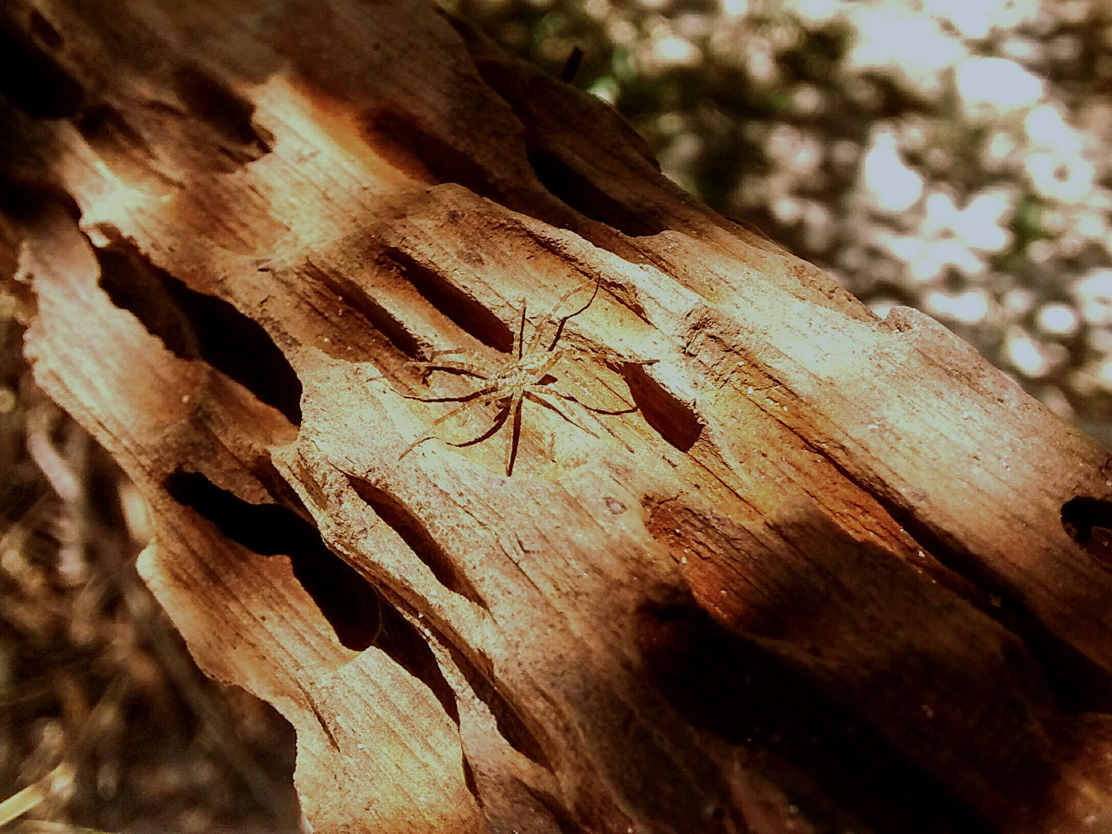 Spider Aranha Tripofobia Tripophobia Trypophobia Trypophilia