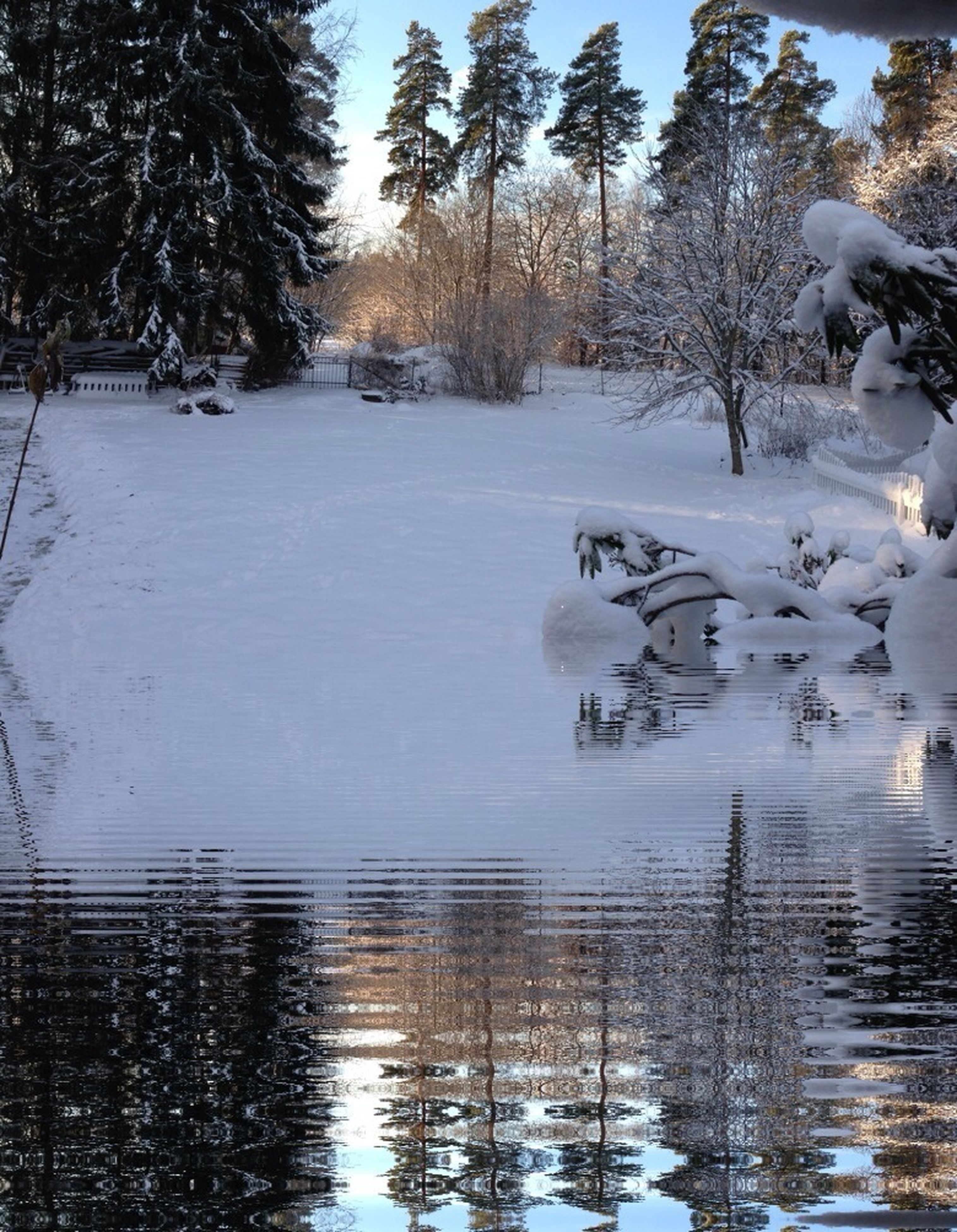 water, winter, snow, cold temperature, tree, lake, reflection, tranquility, frozen, nature, tranquil scene, season, beauty in nature, waterfront, scenics, day, bare tree, white color, weather, outdoors