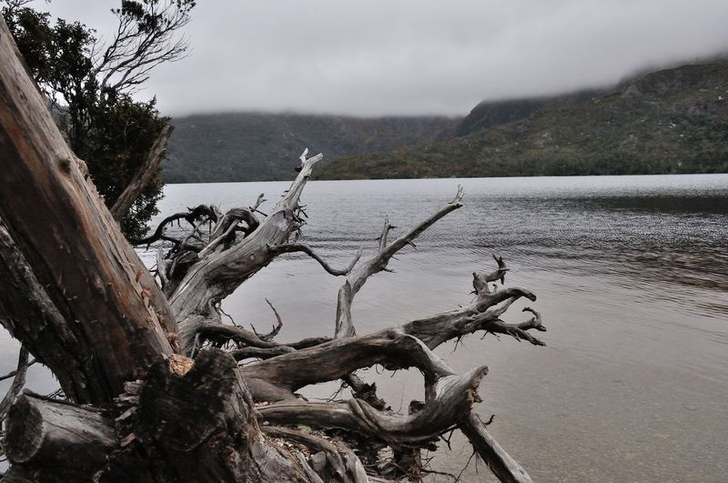 Bare Tree Beauty In Nature Branch Dead Tree Exposed Roots Morning Morning Light Mountain Nature No People Outdoors Scenics Sky Tranquil Scene Tranquility Tree Tree Tree Roots  Tree Trunk Trees And Sky Water Waterfront