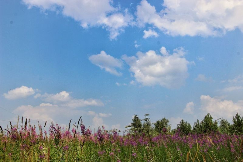 Grass and sky Outside Country Minimalism Minimal Open Space Nature Sky Grass And Clouds Grass Sky And Clouds Free Time Summer Nature_collection Outside Photography Beaty Of Nature Russia Nature Of Russia Colorful Grass Colorful Sky And Clouds Light Clouds Warm Weather Freedom Green Color Blue While