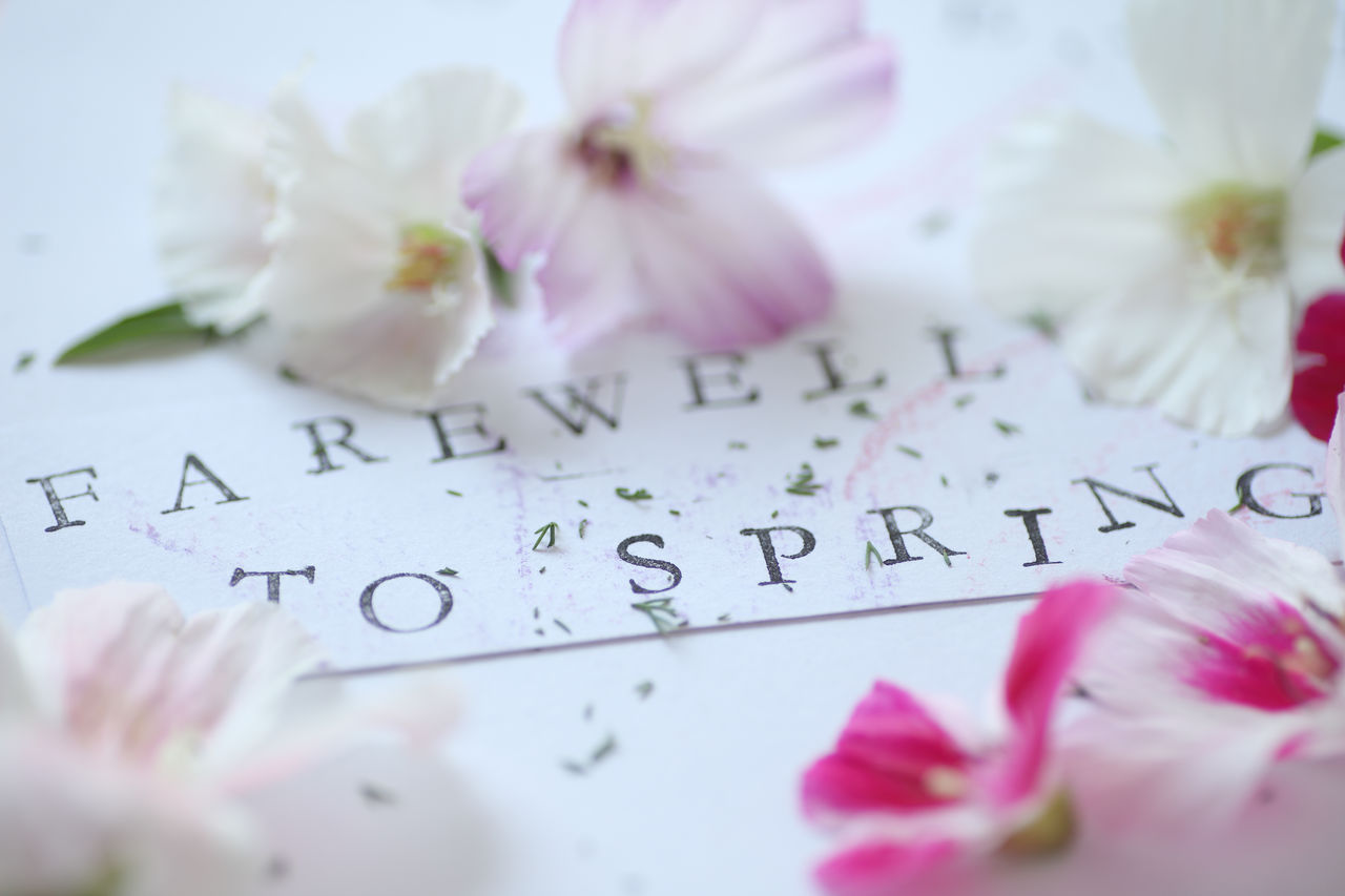 Godetia flowers also called farewell to spring Beauty In Nature Closeup Communication Farewell To Spring Floral Fragility Fresh Flowers Godetia Indoors  Letters Natural Light Nature Paper Pastel Colors Petals Pink Color Text Textures White Words
