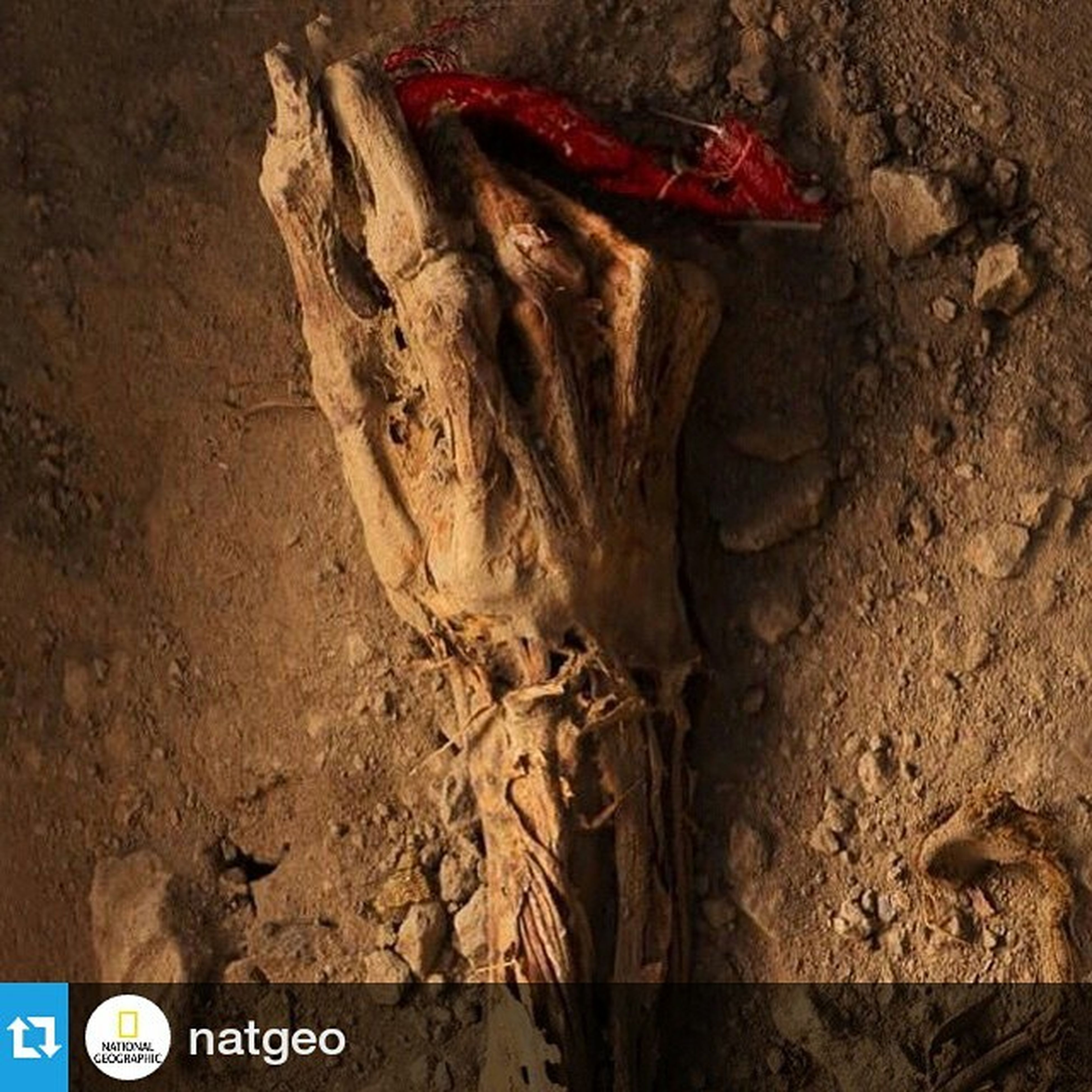 """Halay çekerken gömülmek Repost @natgeo ・・・ An undisturbed hand, which was clutching a fragment of crimson fabric was uncovered before my eyes while working on a archeological dig in Huarmey Peru . The Archeologist , @Natgeo photo editor @Kim_Hubbard and I were privileged to watch as this 1000 year old mummified hand was discovered. I'm always amazing to see something that has not been seen in over 1,000 years or more come back to """"life"""". I made this picture in the first hour of my first trip to the dig. Sometimes the best stuff is right in front of you, right off the bat. I just heard that this image was selected as one of the winning entries in the 2015 Communicate Arts photo contest. This is part of the amazing opportunities that I have had as a photographer for National Geographic. This coming Tuesday, April 21st, I will be speaking @NatGeo headquarters for an @NatGeoLive event about my work as a photographer for the magazine, and how I improved my skill set to make myself attractive to the magazine. Please come if you are DC. @RobertClarkphoto @thephotosociety @Natgeo @InstituteArtist"""