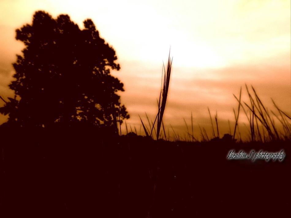 Beautiful Sunset on a Wheat Field Ibrahim S Photography