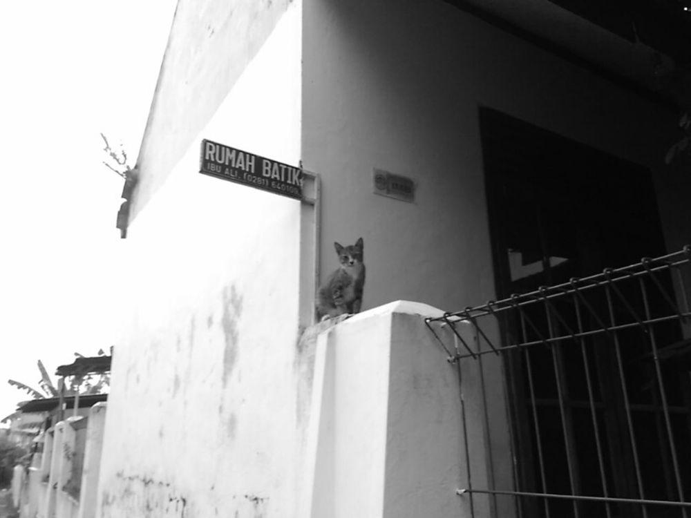 Benproject Maklumfoto EyeEm The Streets EyeEm Best Shots - The Streets Public Places EyeEm Indonesia Indonesian Street Photography Streetphotography_bw INDONESIA Street Photography