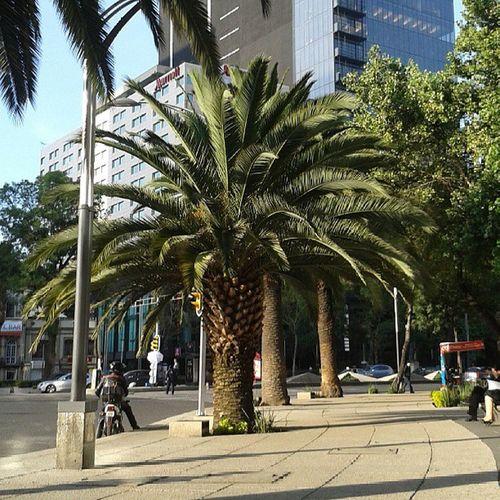 DF Veraniego PumasterDesign Df Nofilter Mexicocity  Mexico Ciudaddemexico Palmera PaseoDeLaReforma Sunnyday