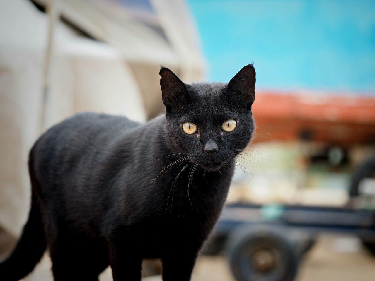 Portrait Of Black Cat On Street