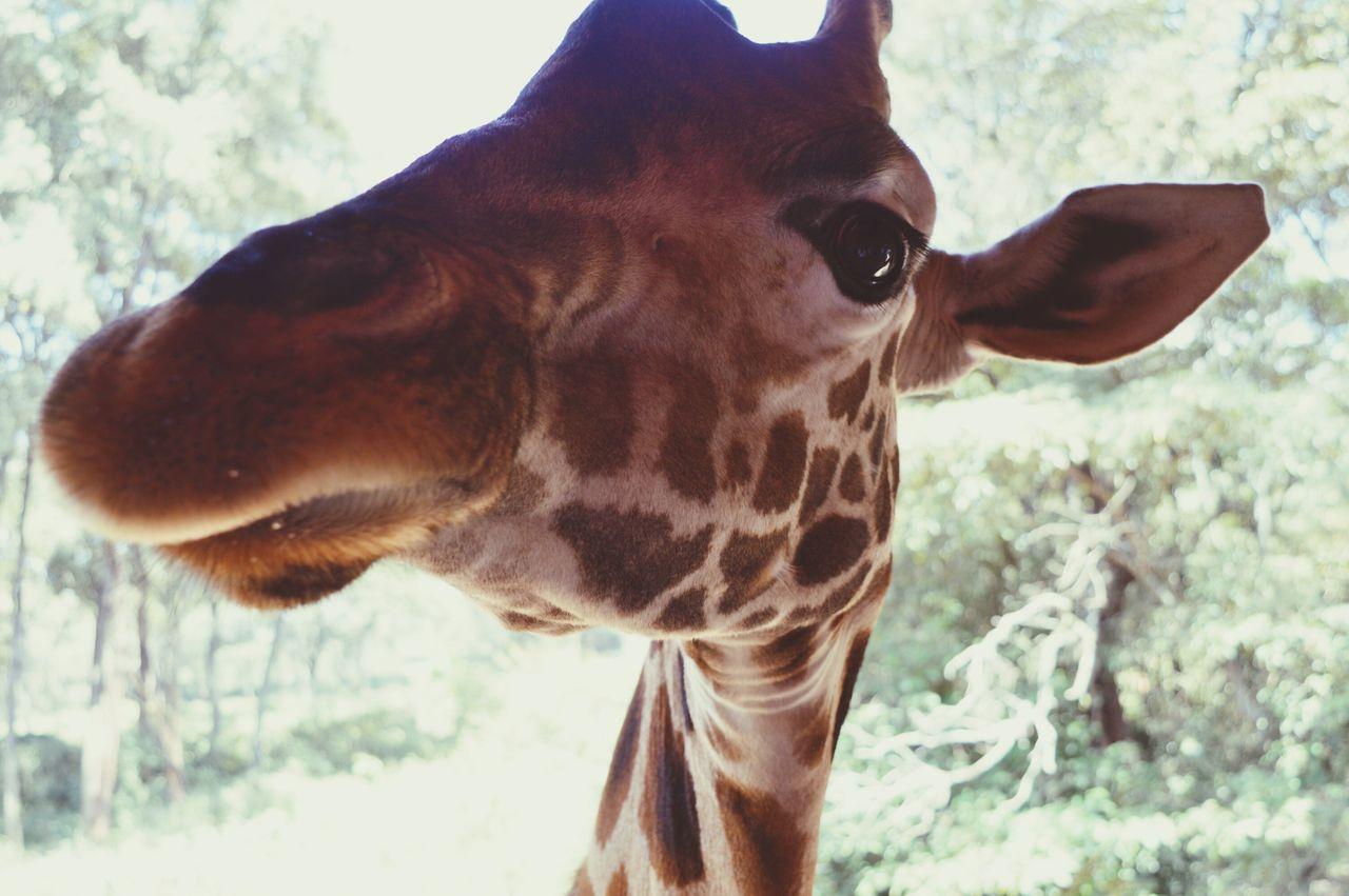Say hello sweety ❤😅 Giraffe♥ Nairobi Kenya Say Cheese! Much Love❤ My Year My View