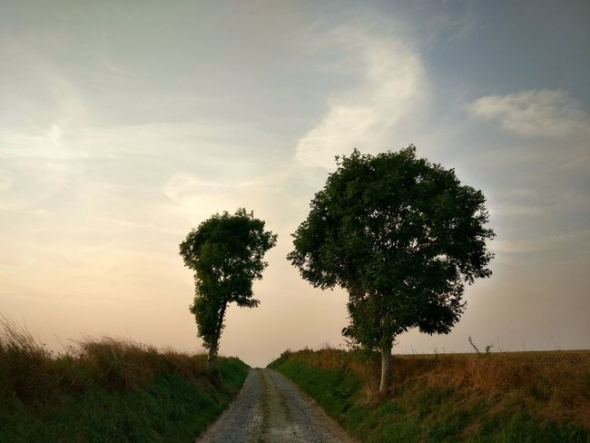 Two Is Better Than One Tree Tranquil Scene Landscape Tranquility Road Countryside Sky The Way Forward Tree Non-urban Scene Vanishing Point Plant Nature Cloud