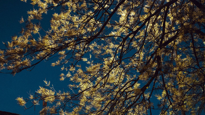 Artistic Beauty In Nature Branch Light Low Angle View Nature Night Tree EyeEmNewHere