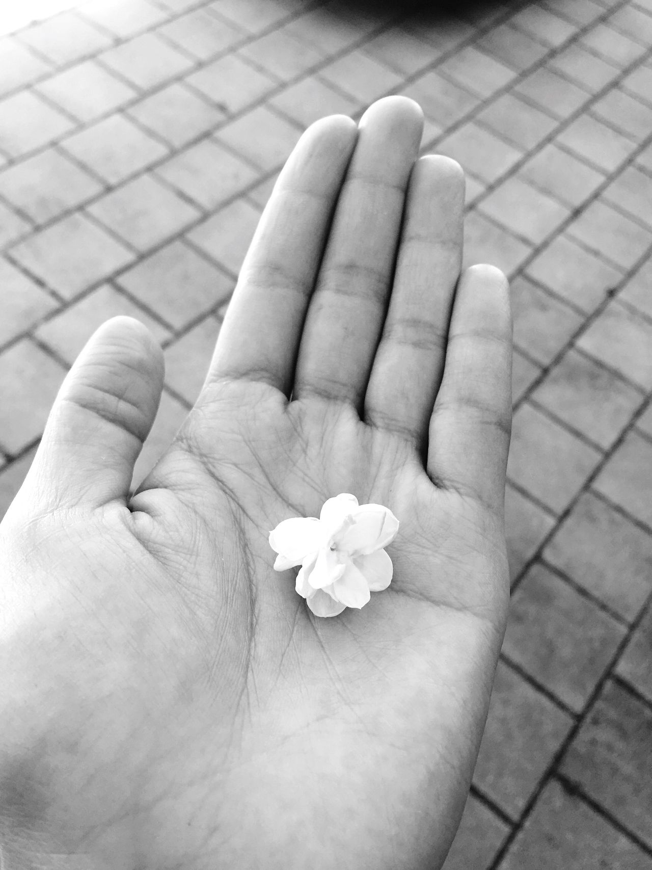 Jasmine in my hand. (null)Human Hand Human Body Part Outdoors Fragility Palm Flowers, Nature And Beauty Flower Collection Flower White Flower Jasmine Flower Jasmine Collection Jasmine Flower Photography Pure Blackandwhite