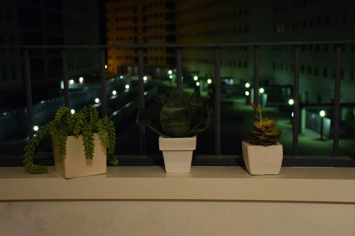 Night Illuminated No People Plant Green Color Contrast No Motion Tranquility Indoors  Surreal Silence Enjoying Life Lifestyles Enjoying The Moment Dark Just Shoot.. Darkness And Light Contrasting Colors GrowthEnjoying Silence Sky Nightphotography Taking Photos First Eyeem Photo