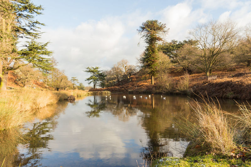 Reflections in the water in the countryside in England Birds🐦⛅ Blue Cloudy Sky Grass Lake View Leaves🌿 Plants 🌱 Reflections In The Water River Trees Uk Water