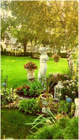 Venus De Milo Garden Snoopingin people's backyard😂 Flowers,Plants & Garden Beautiful Hanging Out Sunny Day Green Grass
