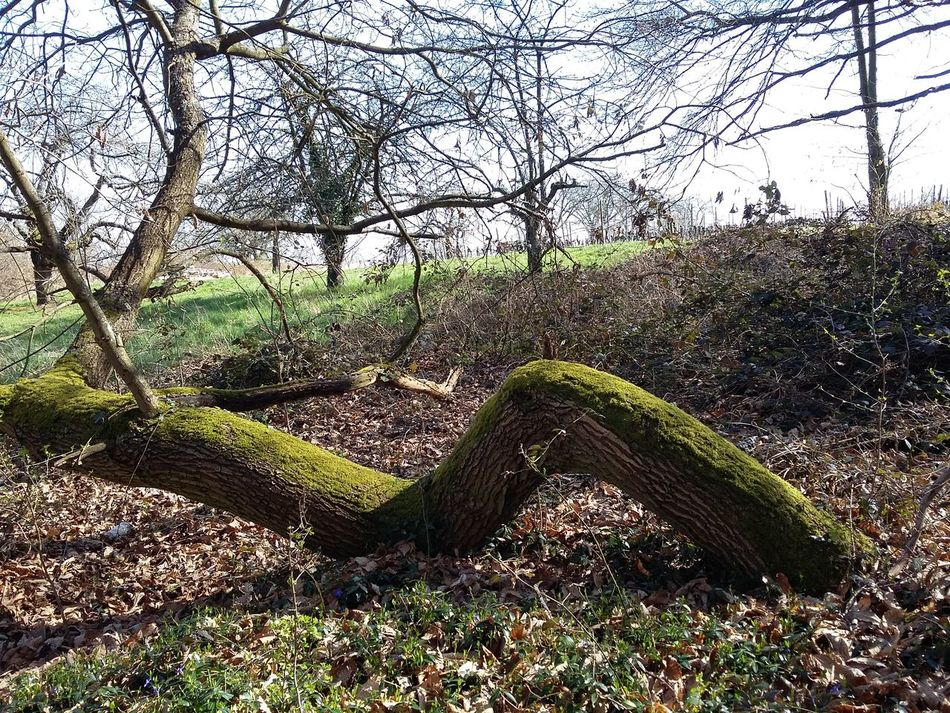 Contorted Tree Nature Shapes Nature Rebirth Mossy Tree Outdoors Close-up No People Just A Dog In Background Peace And Tranquility Meditation Time Lots Of Leaves in Weisenheim ,Deutschland