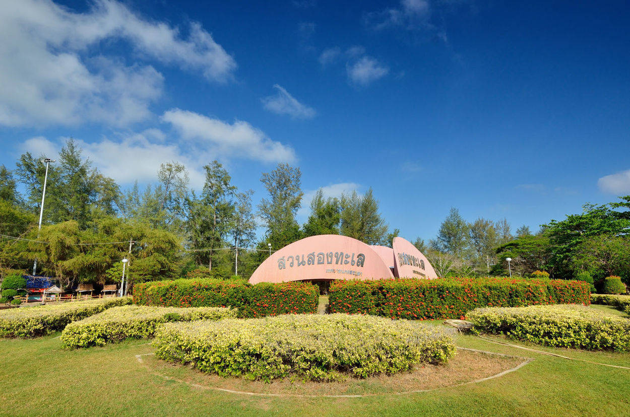Cloud - Sky Day Field Grass Green Green Color Growth Landscape Nature Outdoors Plant Scenics Sky Songkhla Summer Sunny Thailand Traffic Circle Travel Destinations Tree