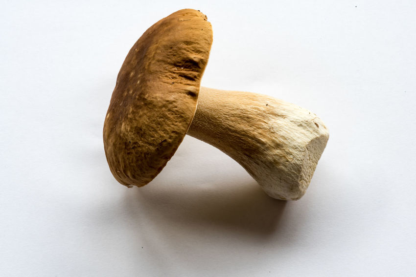 king bolete, Boletus edulis, Steinpilz Close-up Day Food Food And Drink Freshness Indoors  No People Studio Shot White Background