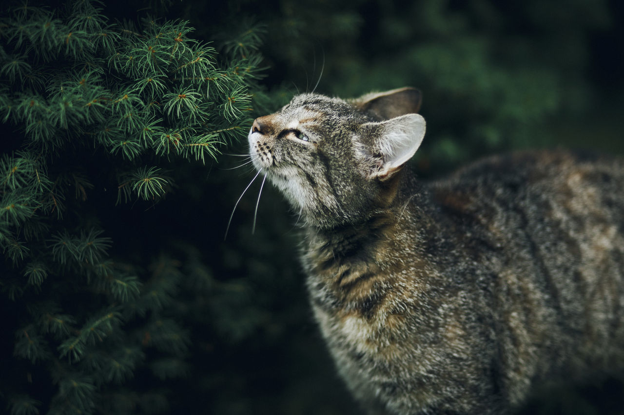 Lazy Sunday in Mielec, Poland. Animal Themes Close-up Day Domestic Animals Domestic Cat Feline Mammal Nature No People One Animal Outdoors Pets Whisker