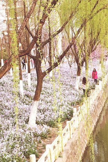 Urban Spring Fever