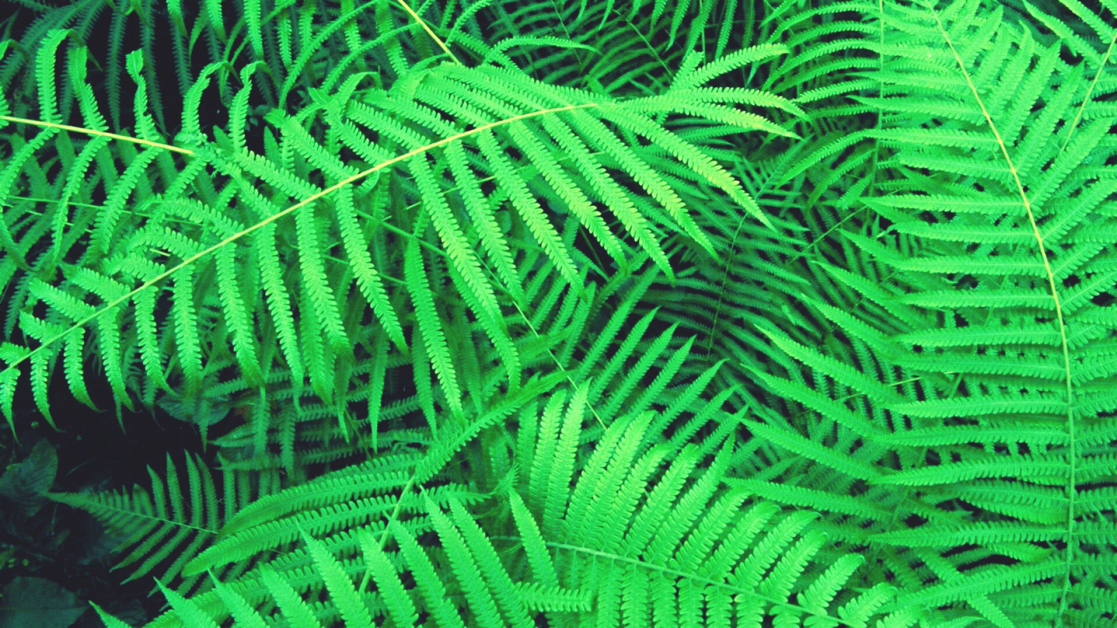 full frame, green color, backgrounds, close-up, growth, leaf, fern, nature, plant, beauty in nature, outdoors, freshness, fragility, lush foliage, green, day, tranquility, frond, botany, no people, scenics