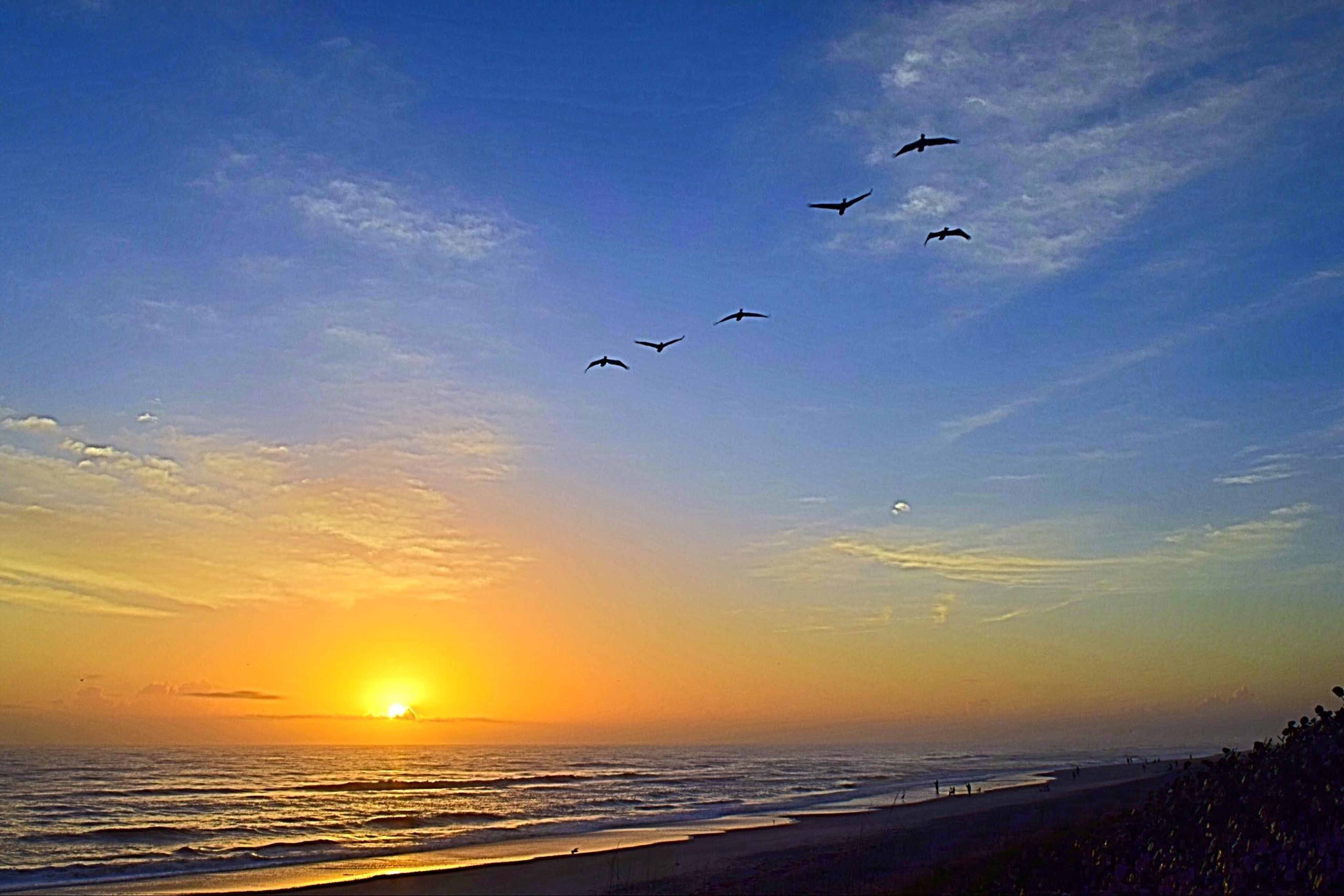 flying, bird, sunset, sea, beauty in nature, nature, sky, flock of birds, animals in the wild, beach, silhouette, water, scenics, animal themes, large group of animals, mid-air, migrating, outdoors, horizon over water, no people, spread wings, day
