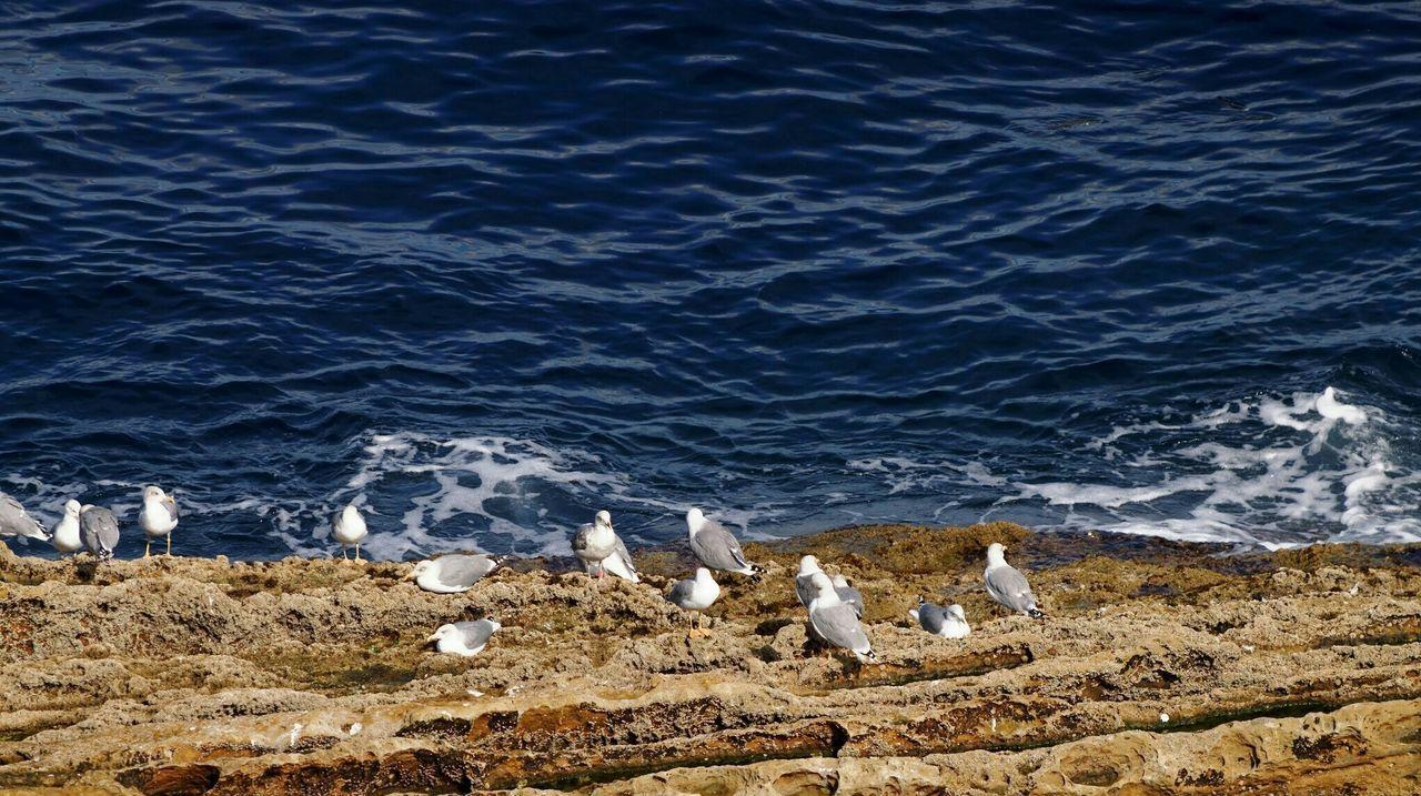 Seagulls San Sebastian Donostia Santa Clara Island La Concha Nature Animals Birds