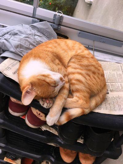 Cat Kedi Yellow Sleeping Yellowcat SarıKedi Sleeping Cat One Animal Pets Domestic Animals Animal Themes Domestic Cat Mammal Full Length No People Indoors  Day Vertical