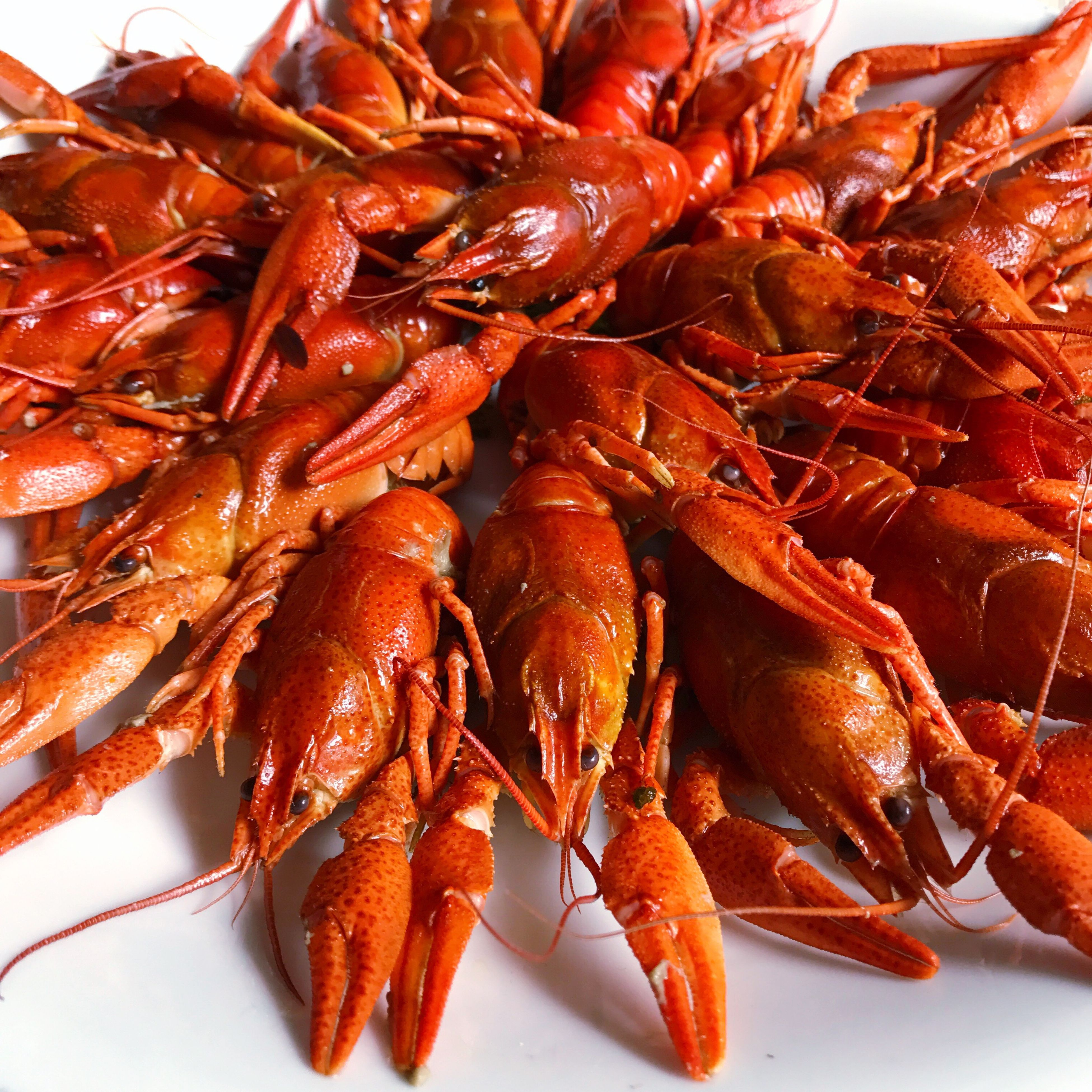 seafood, food, lobster, food and drink, freshness, prawn, orange color, crustacean, no people, healthy eating, shrimp, close-up, cooked, plate, boiled, indoors, ready-to-eat, animal themes, day