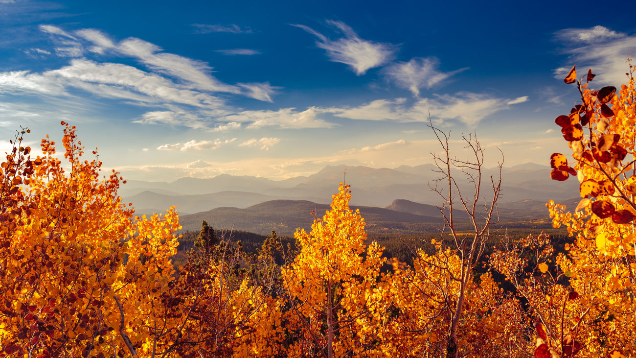 Autumn Autumn Autumn Colors Autumn Leaves Beauty In Nature Cloud - Sky Colorado Evening Light Fall Colors Golden Gate Canyon State Park Landscape Mountain Mountain Range Nature No People Non-urban Scene Orange Color Outdoors Scenics Season  Sky The Great Outdoors - 2016 EyeEm Awards Tree 43 Golden Moments