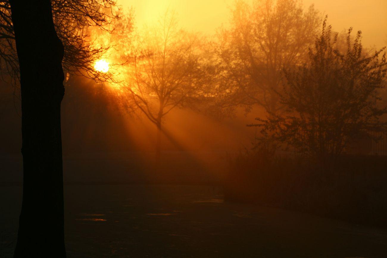 good morning 😊 Tree Nature Beauty In Nature Fog Sky Outdoors Silhouette Tranquil Scene Sun Winter Landscape Sunrise - Dawn Eyem Best Shots Purmerend