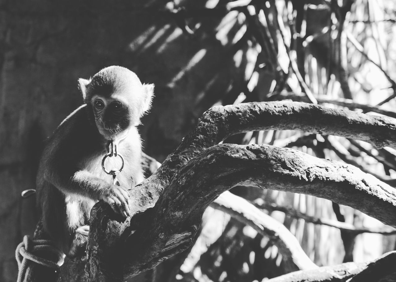 one animal, mammal, animal themes, outdoors, tree, no people, day, branch, nature, close-up