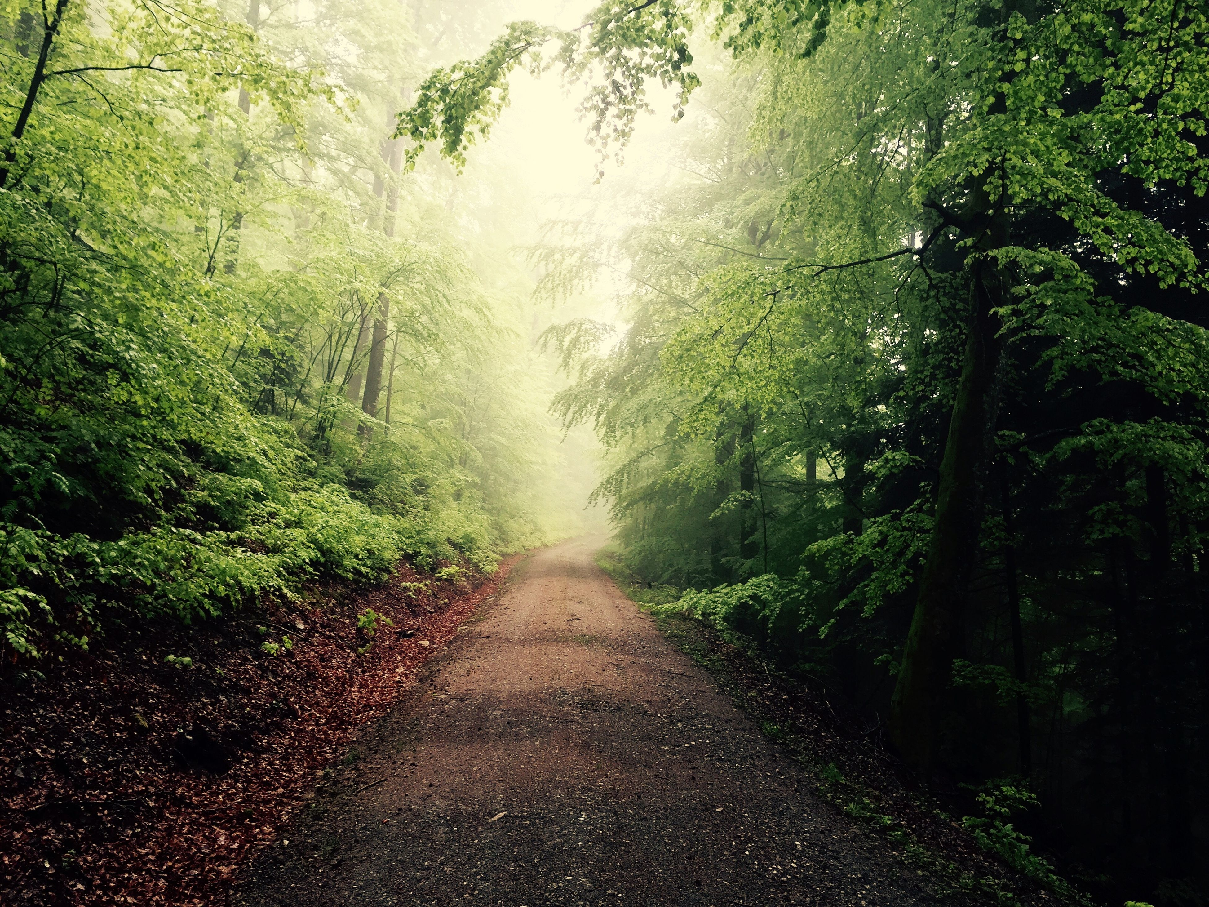 the way forward, tree, diminishing perspective, transportation, vanishing point, road, growth, tranquility, forest, nature, empty road, green color, country road, tranquil scene, fog, day, dirt road, beauty in nature, outdoors, no people