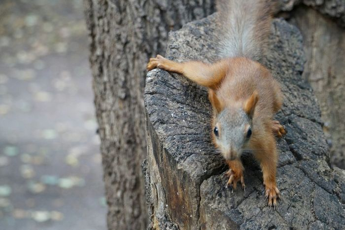 Capture The Moment Taking Photos Gorky ParkYou brought me nutlets?Squirrel Eye Em Animal Lover My Favorite Photo Nature's Diversities
