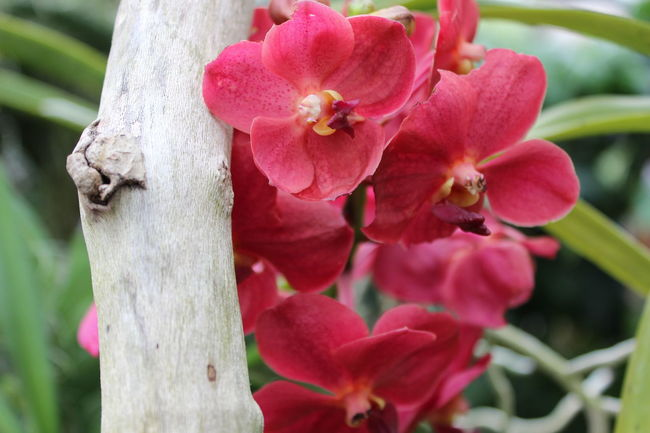 Close-up Flower Orchids Beauty In Nature Fragility Tree Tree Trunk Selective Focus Botany Orchidee Orchid Blossoms Blossom Orchid Flower