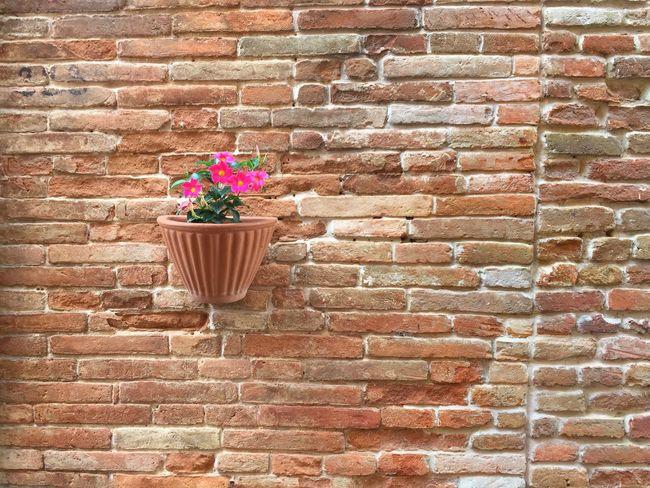 Flowerpot Brick Wall Minimalism Outdoors Showcase July Architecture Mediterranean  Summer Still Life