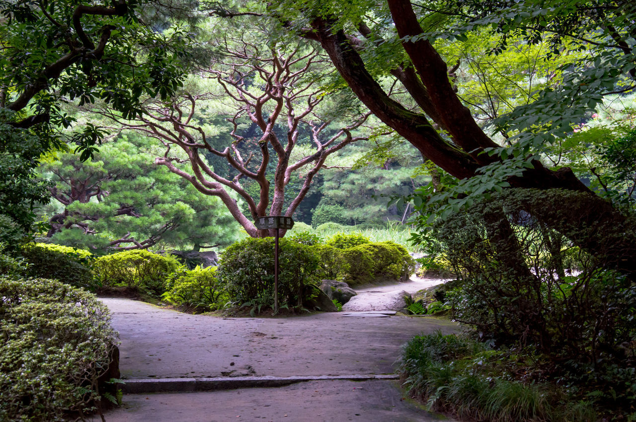 ASIA Branch Calm Day Famous Place Garden Horizontal Japan Landscape Nature No People Outdoors Park Pathway Peaceful Plant Shrine Tokyo Tranquility Travel Destinations Travelling Tree The Great Outdoors - 2017 EyeEm Awards
