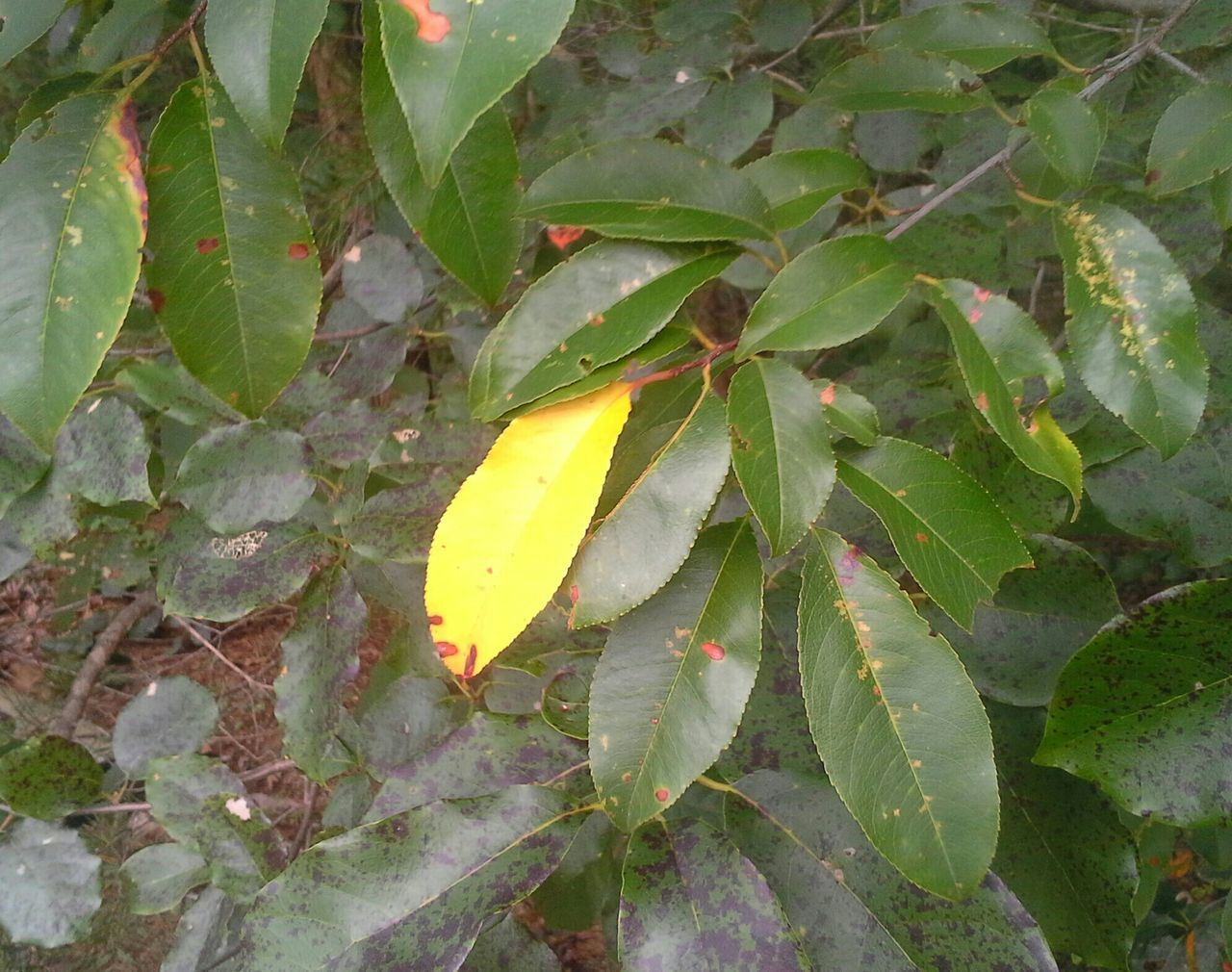 Lonely Yellow Leaf Nature Trees Tupponce Photography David Tupponce Gretna Virginia Usa