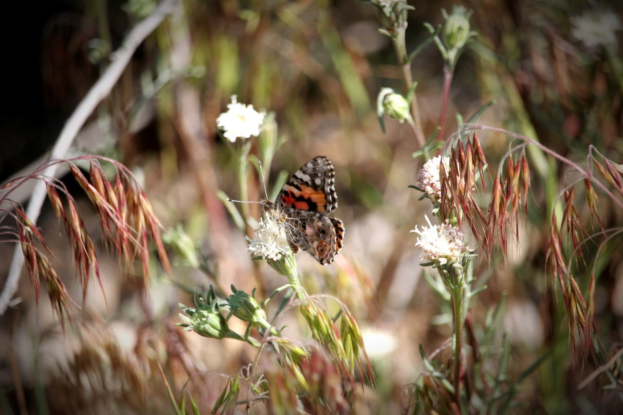 Butterfly Butterflies Migrate Taking Photos Cali Life California Dreaming Nature_collection Nature EyeEm Nature Lover Beautiful Nature