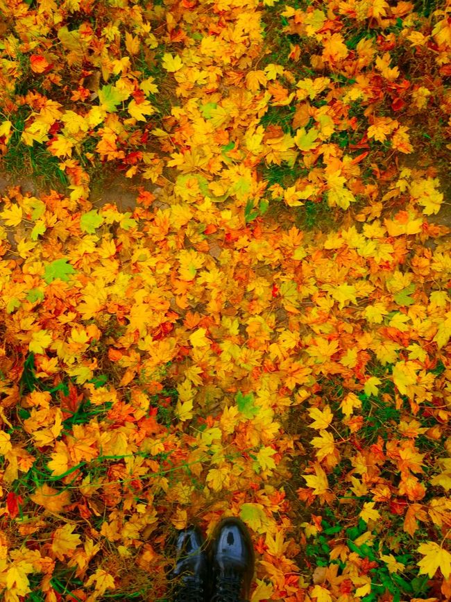 Dramatic Angles Autumn Leaf Shoe Season  Lifestyles High Angle View Change Yellow Multi Colored Personal Perspective Field Tranquility Person Human Foot Day Outdoors Orange Color Beauty In Nature Nature Vibrant Color