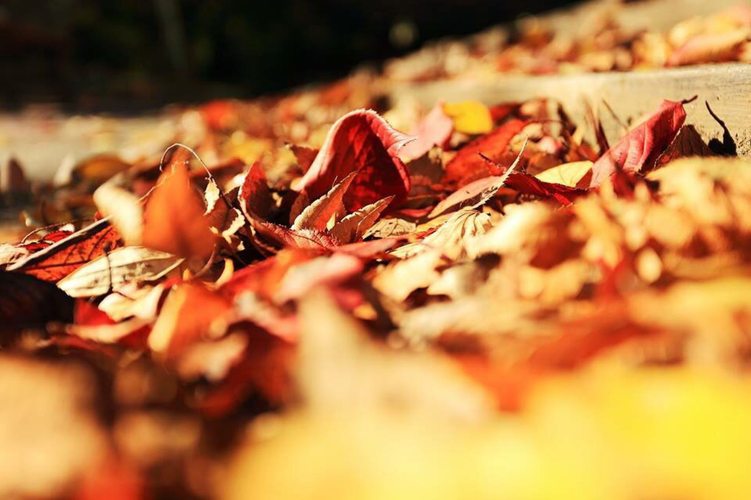 autumn, leaf, change, dry, selective focus, leaves, season, close-up, focus on foreground, fallen, abundance, orange color, nature, no people, day, outdoors, large group of objects, fall, surface level, maple leaf