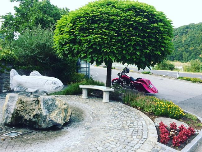 Tree Day Outdoors Statue No People Sculpture Growth Plant Nature Sky Austria ❤ Austria Pink Color Harley Davidson Baggerstyle Harleydavidson