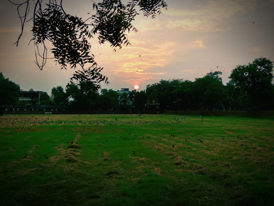 Sunset Tree Field Sky Tranquility Tranquil Scene Landscape Green Color Scenics Cloud - Sky Nature Beauty In Nature Rural Scene Growth Solitude Outdoors Non-urban Scene Distant Studfarm No People Flock Of Birds